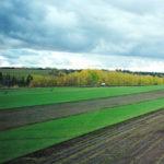 big lake sod farm alberta grass and sod